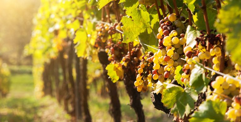 Hungarian Watch Autumn